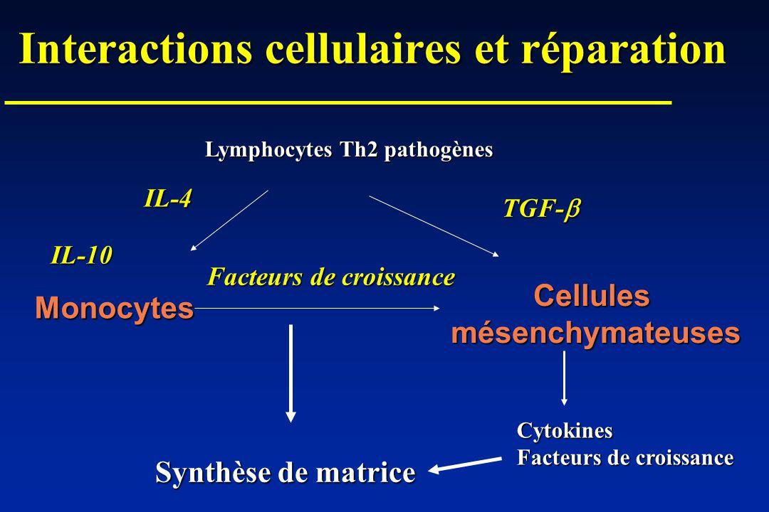 Interactions cellulaires et réparation