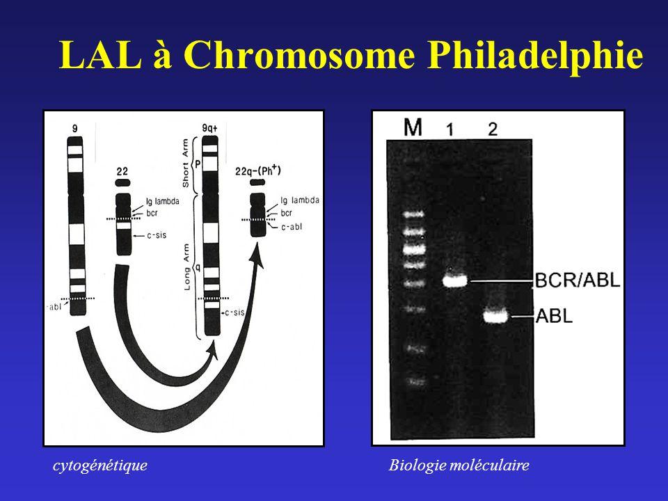 LAL à Chromosome Philadelphie