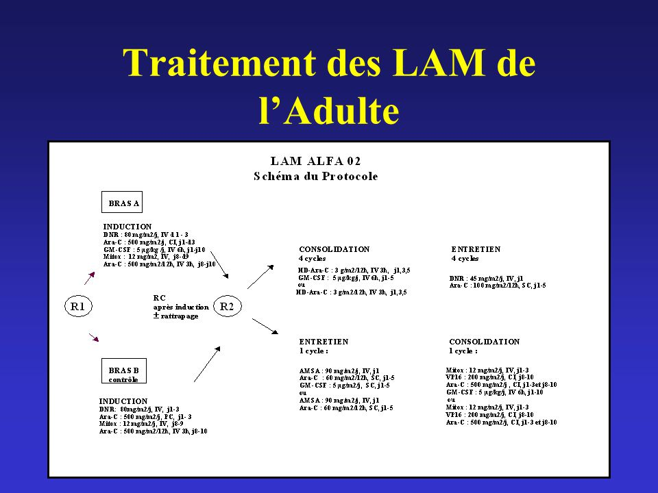 Traitement des LAM de l'Adulte