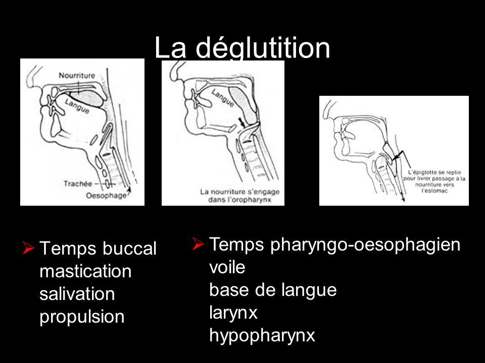 La déglutition Temps pharyngo-oesophagien voile base de langue larynx hypopharynx.