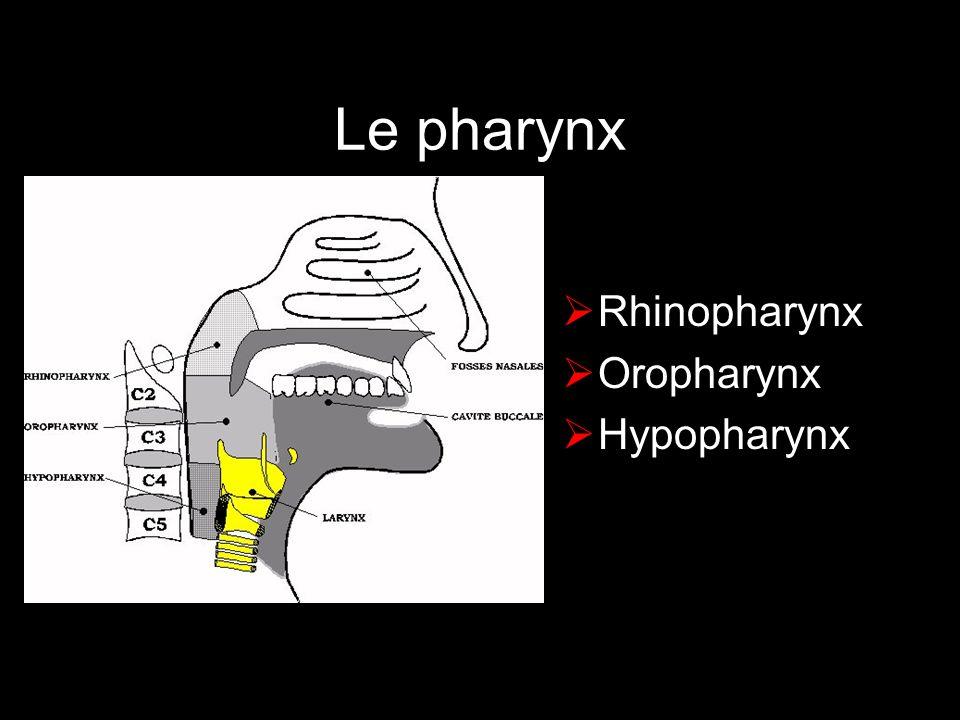 Le pharynx Rhinopharynx Oropharynx Hypopharynx
