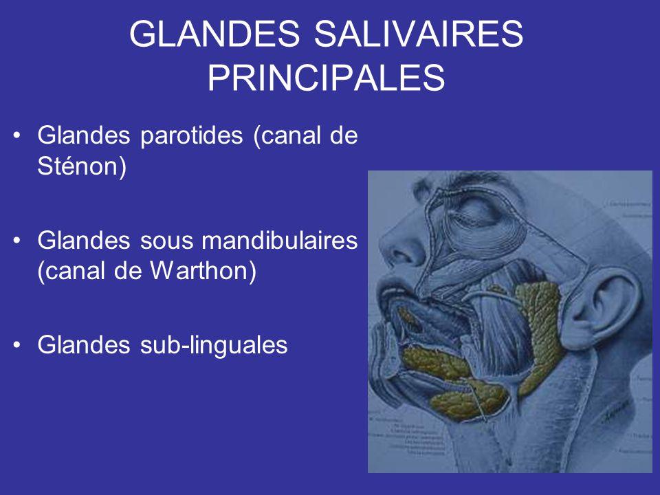 GLANDES SALIVAIRES PRINCIPALES