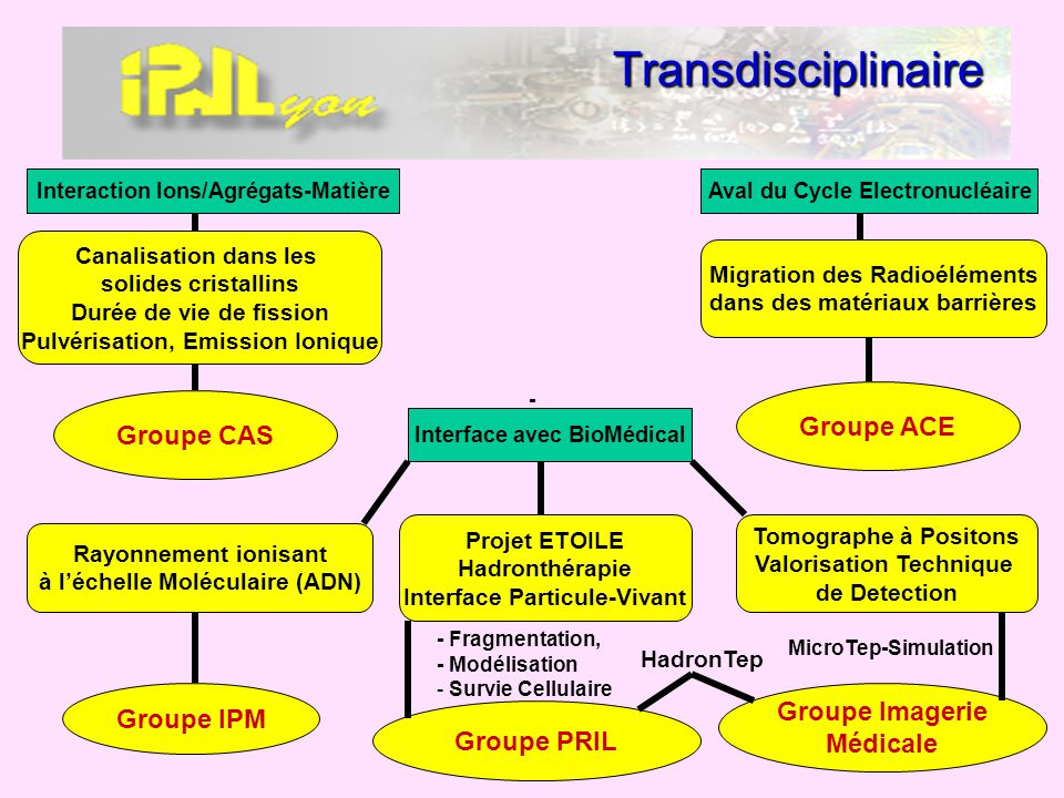 Transdisciplinaire Groupe ACE Groupe CAS Groupe Imagerie Groupe IPM
