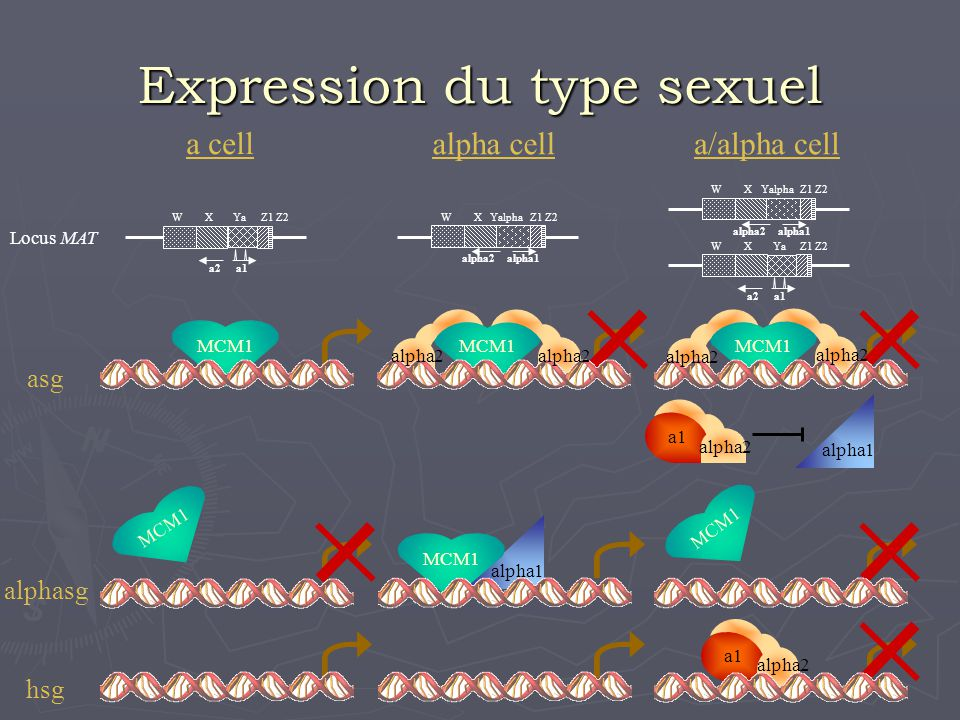 Expression du type sexuel