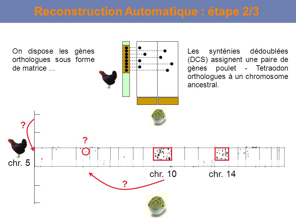 Reconstruction Automatique : étape 2/3