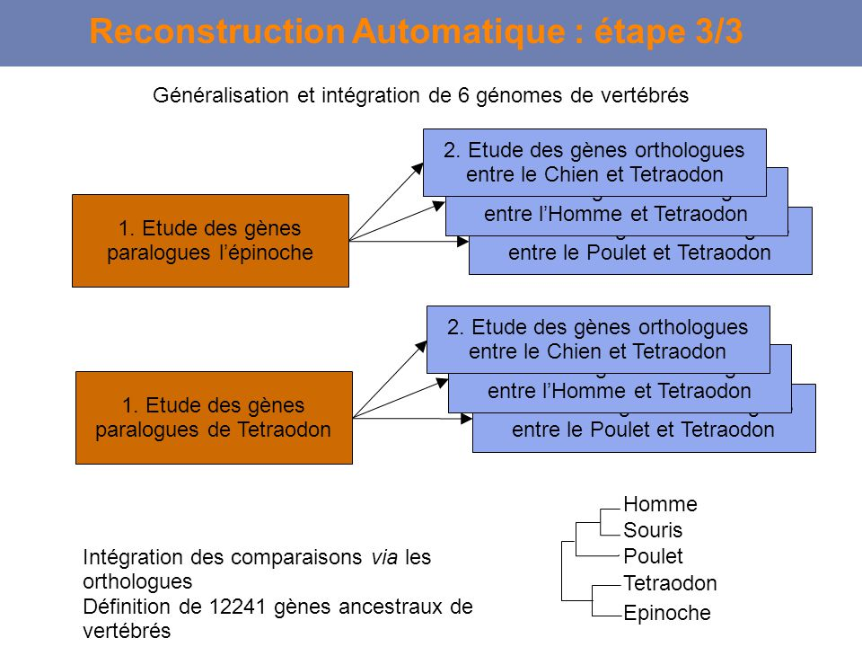 Reconstruction Automatique : étape 3/3