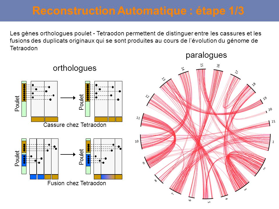 Reconstruction Automatique : étape 1/3