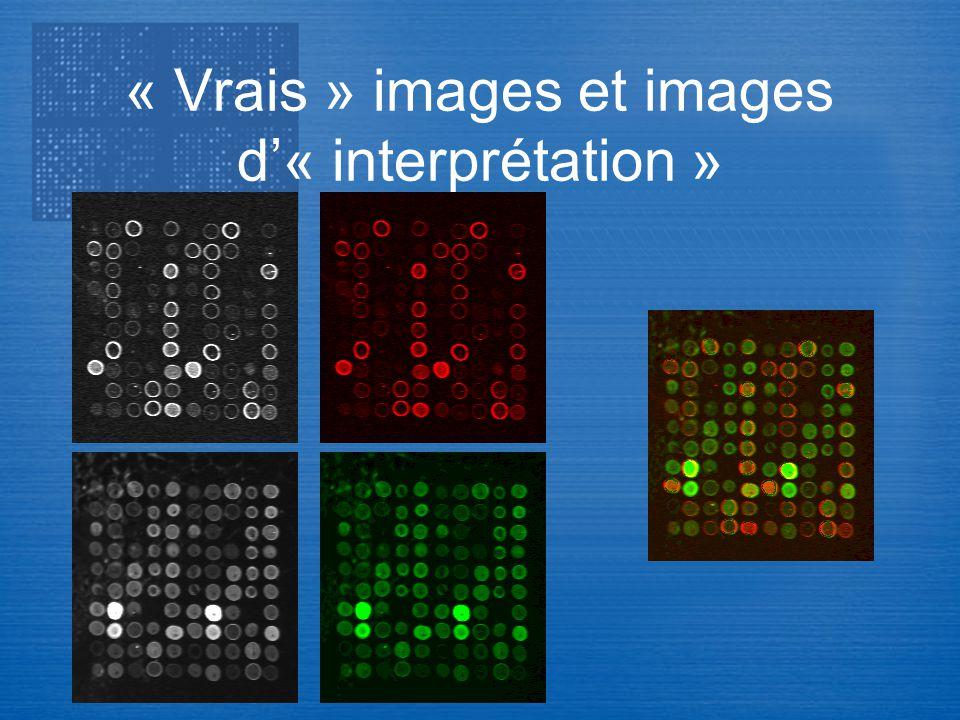 « Vrais » images et images d'« interprétation »