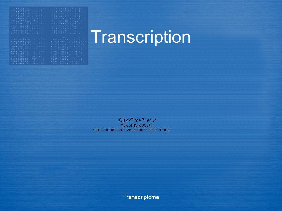Transcription Transcriptome