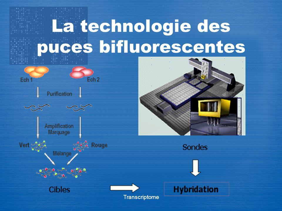 La technologie des puces bifluorescentes