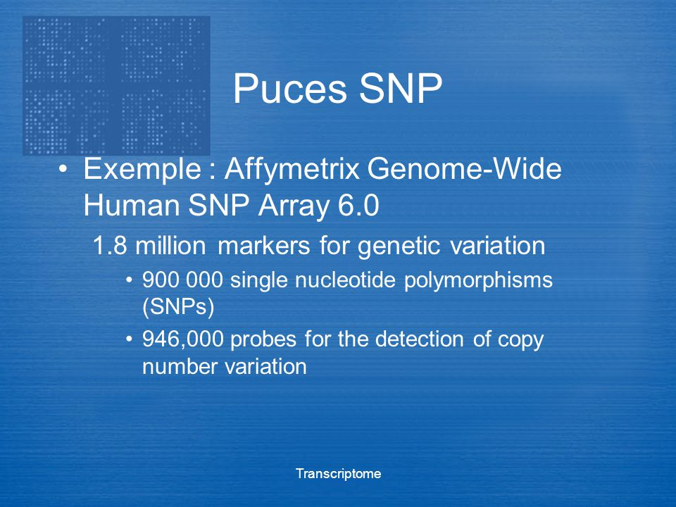 Puces SNP Exemple : Affymetrix Genome-Wide Human SNP Array 6.0