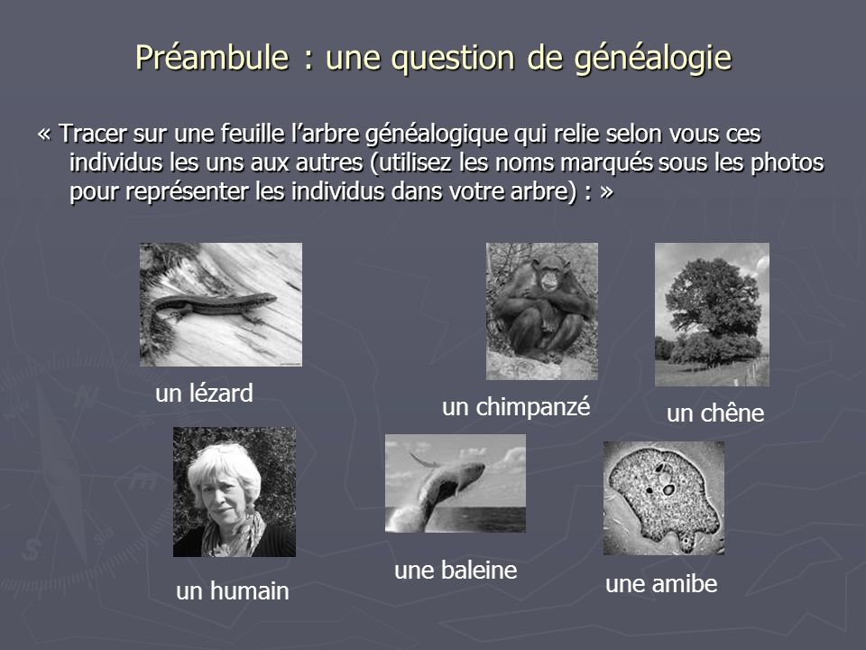 Préambule : une question de généalogie