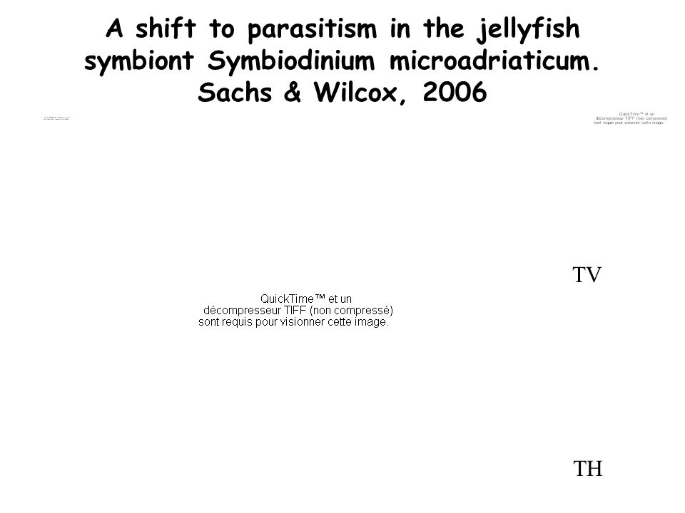 A shift to parasitism in the jellyfish symbiont Symbiodinium microadriaticum. Sachs & Wilcox, 2006