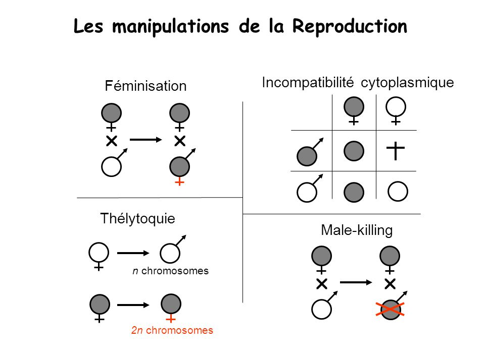 Les manipulations de la Reproduction