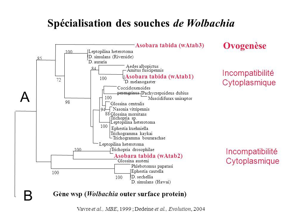 Spécialisation des souches de Wolbachia