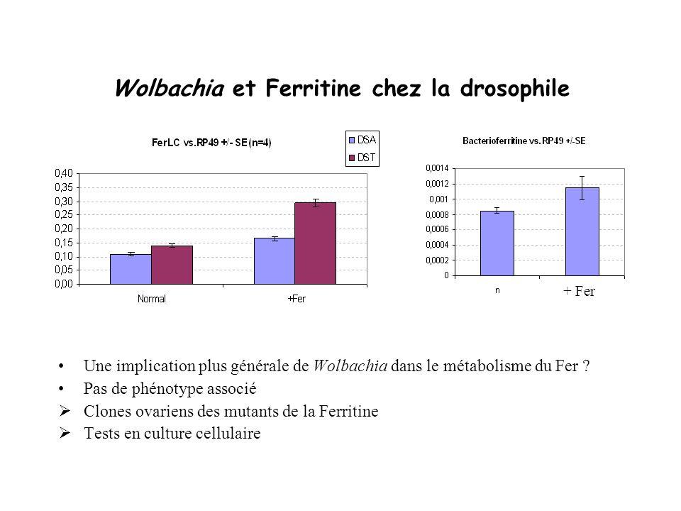 Wolbachia et Ferritine chez la drosophile