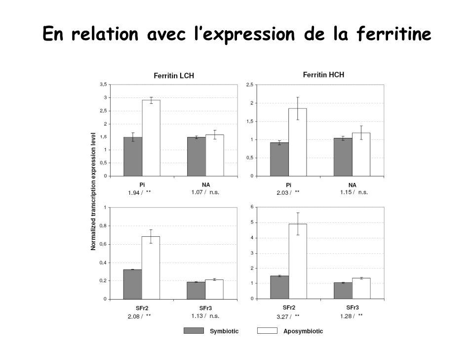 En relation avec l'expression de la ferritine