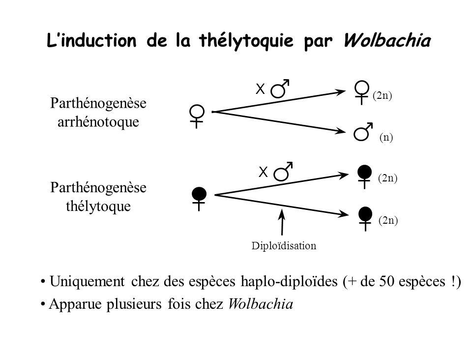 L'induction de la thélytoquie par Wolbachia