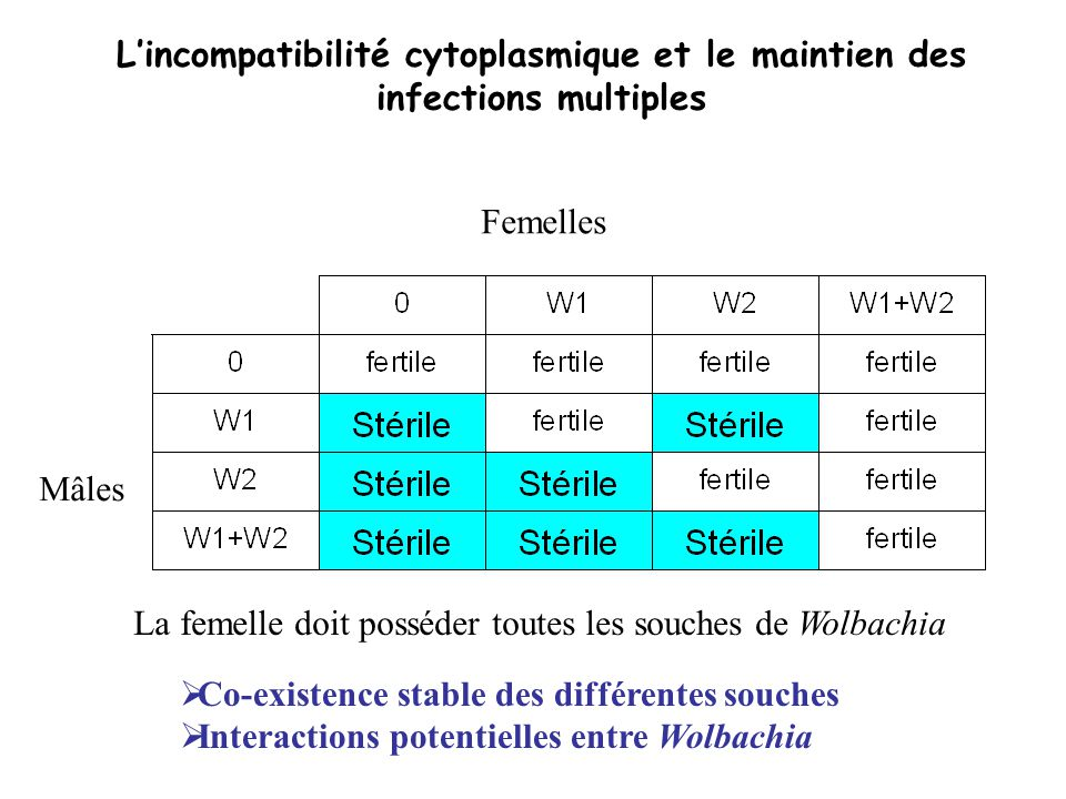 L'incompatibilité cytoplasmique et le maintien des infections multiples
