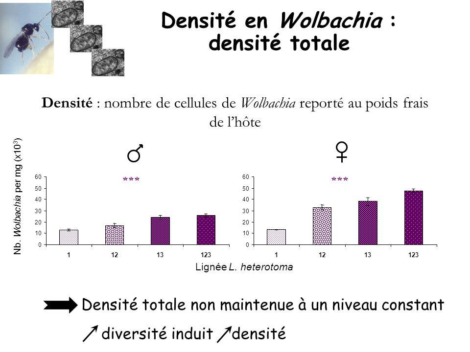 Densité en Wolbachia : densité totale