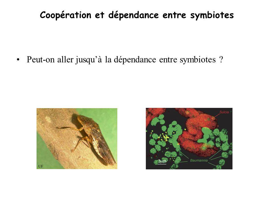 Coopération et dépendance entre symbiotes