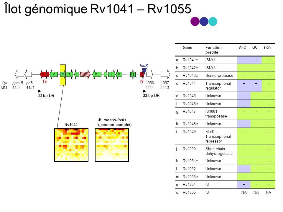 Îlot génomique Rv1041 – Rv1055 Gene Fonction prédite a Rv1041c ISMt1 +