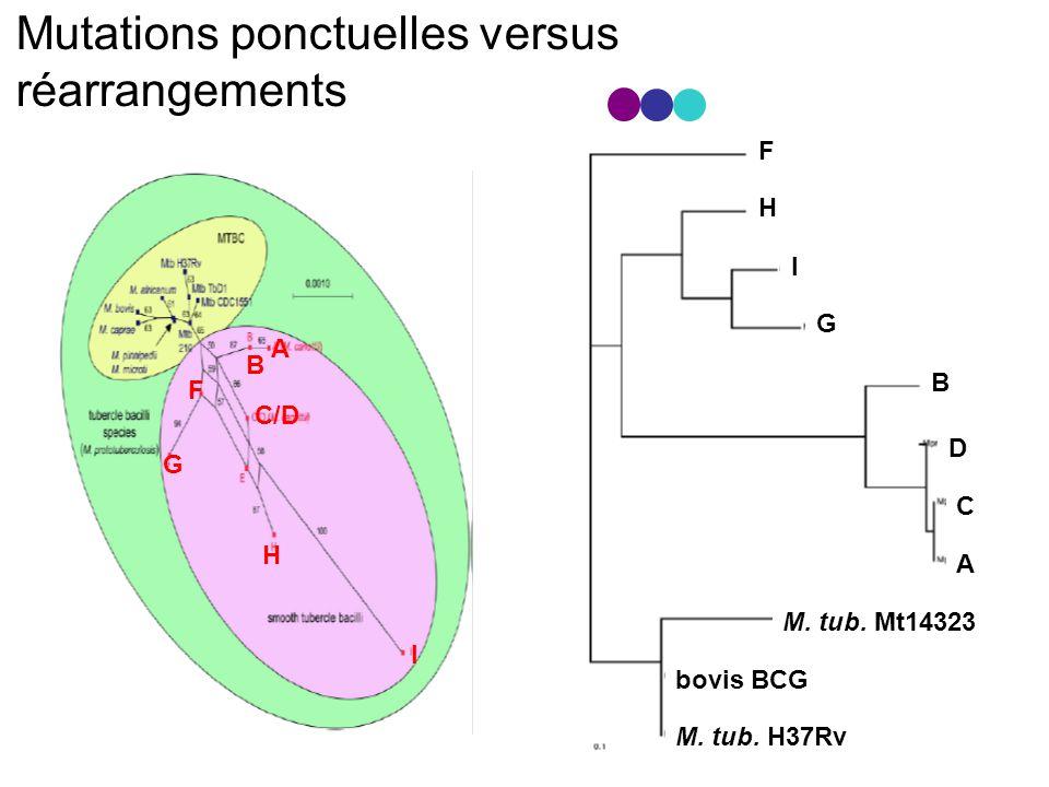 Mutations ponctuelles versus réarrangements