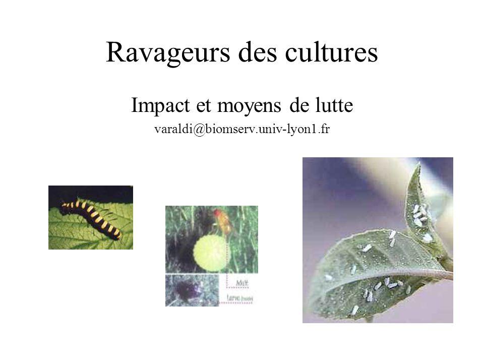 Ravageurs des cultures
