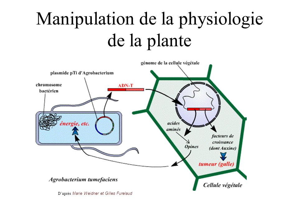 Manipulation de la physiologie de la plante