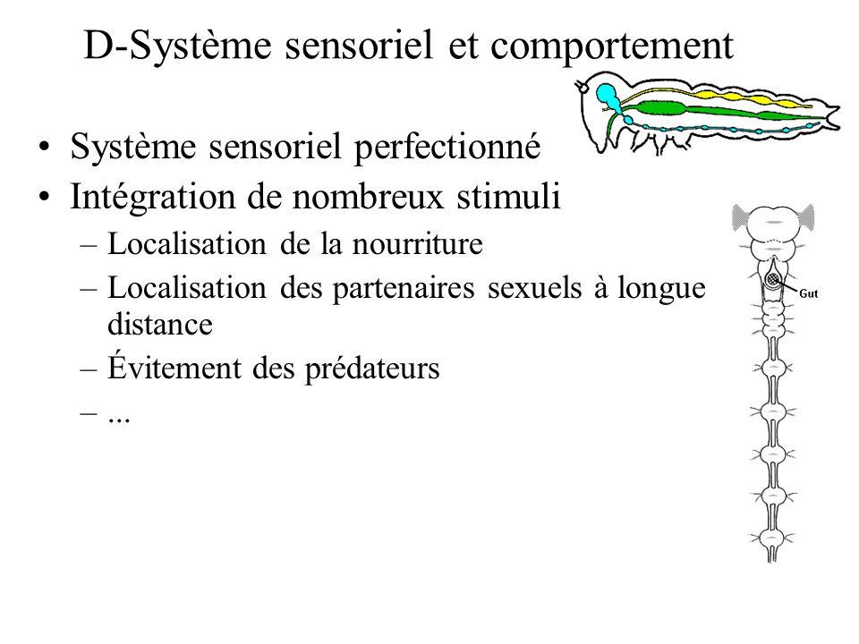 D-Système sensoriel et comportement