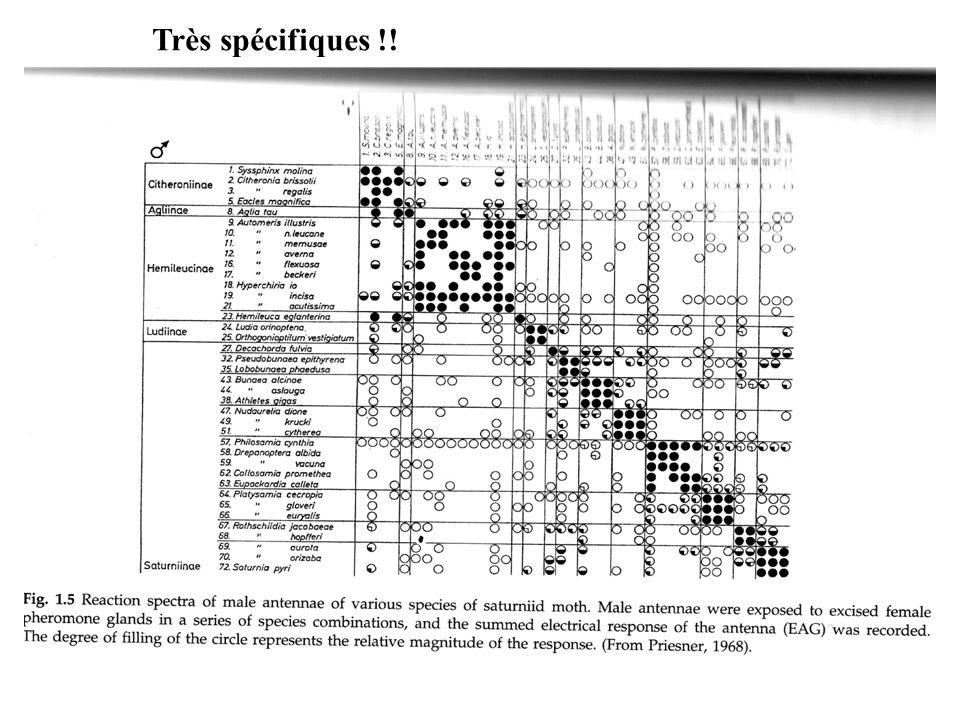 Très spécifiques !! Insect pheromones and ther use in pest management Howse, Stevens &Jones 1998.