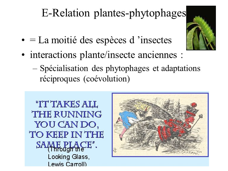 E-Relation plantes-phytophages