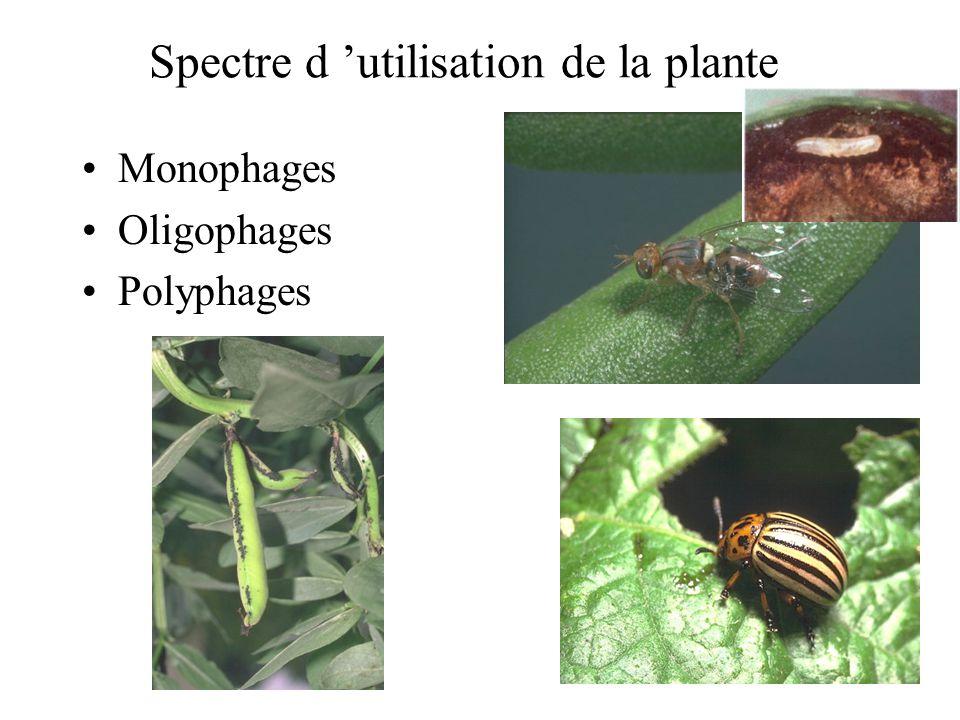 Spectre d 'utilisation de la plante
