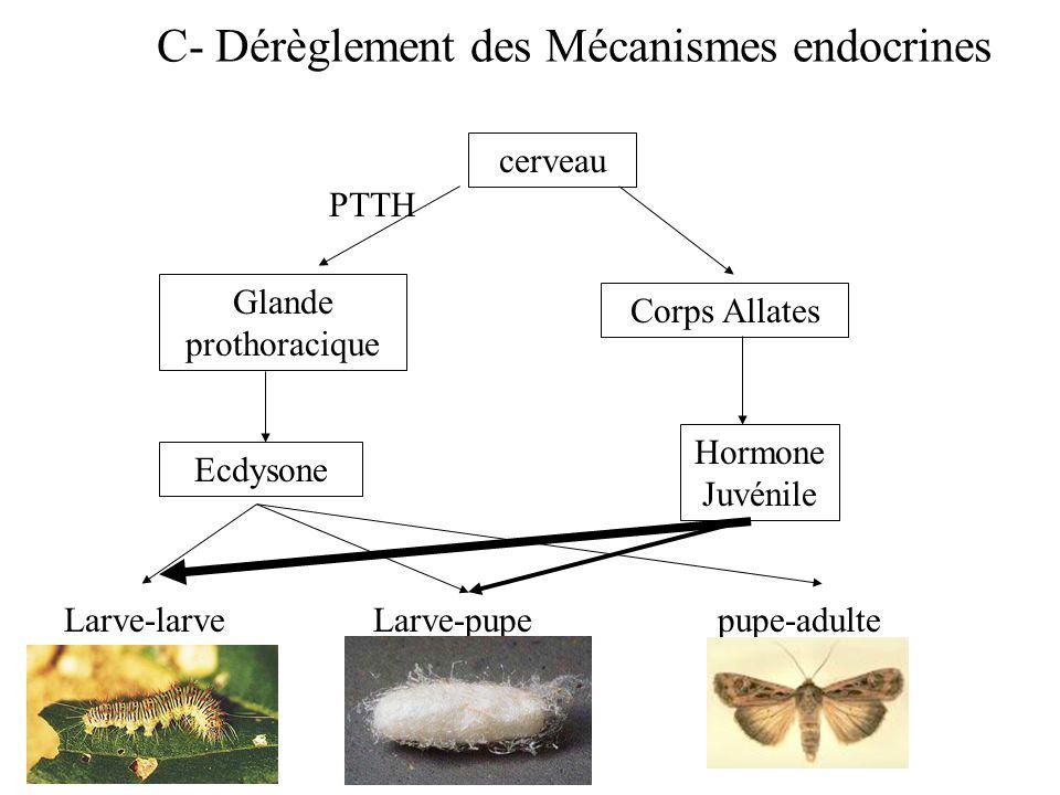 C- Dérèglement des Mécanismes endocrines