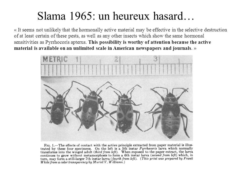 Slama 1965: un heureux hasard…