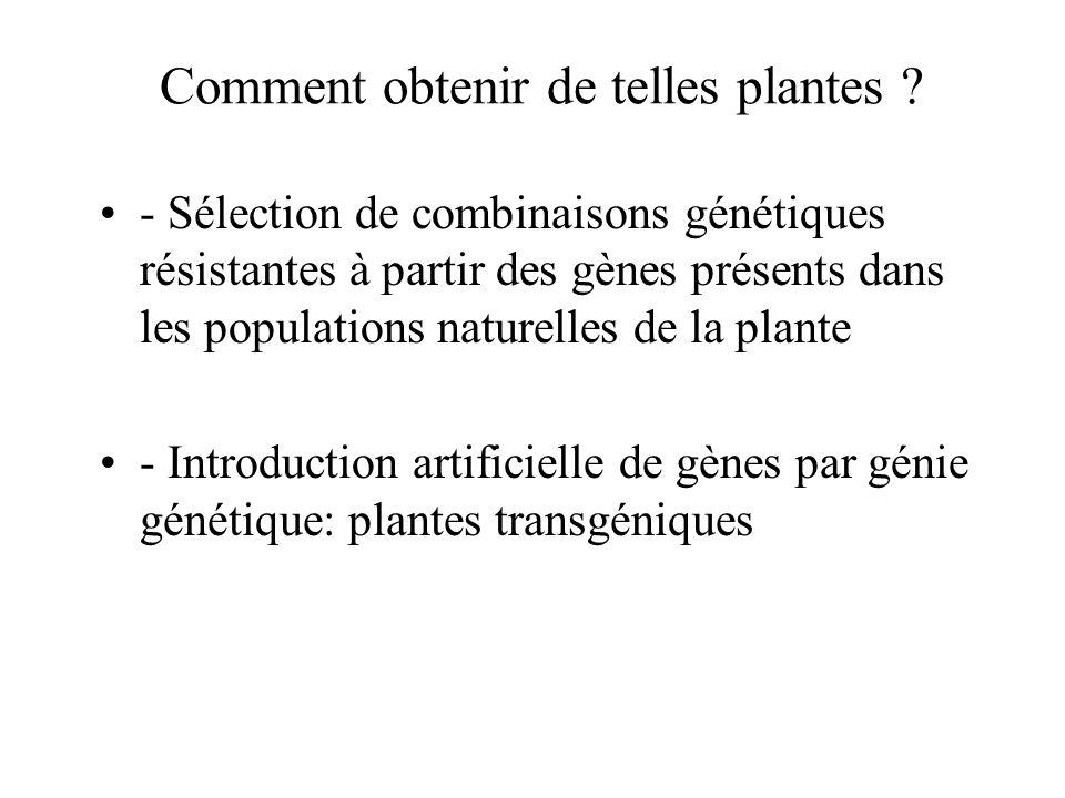 Comment obtenir de telles plantes
