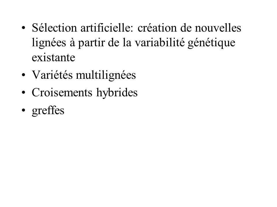 Sélection artificielle: création de nouvelles lignées à partir de la variabilité génétique existante