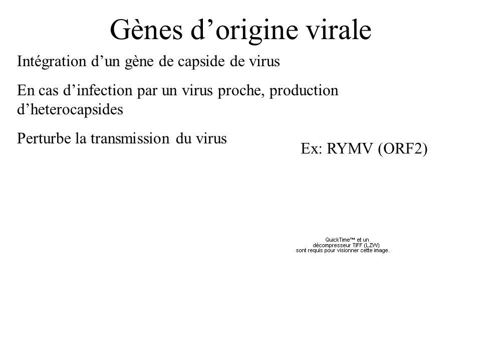 Gènes d'origine virale