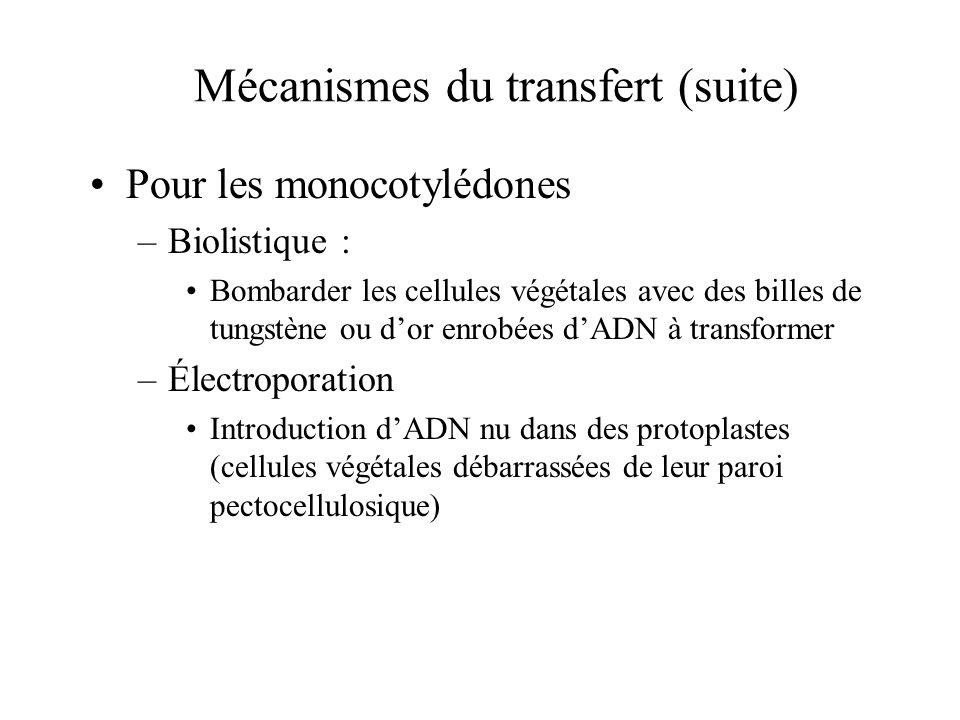 Mécanismes du transfert (suite)