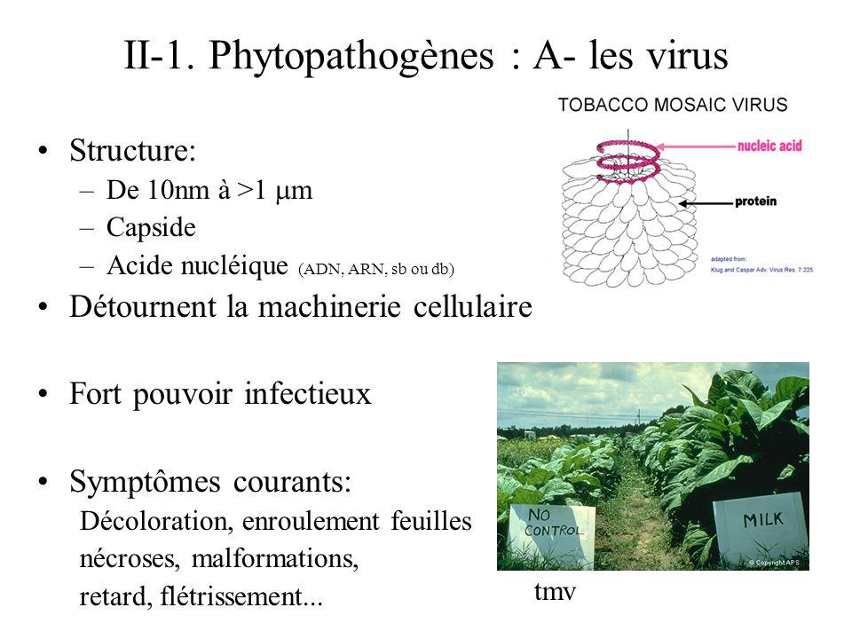 II-1. Phytopathogènes : A- les virus