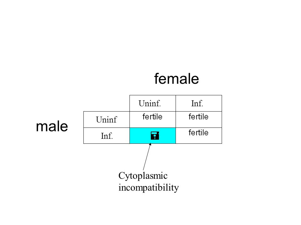 female Uninf. Inf. Uninf male Inf. Cytoplasmic incompatibility