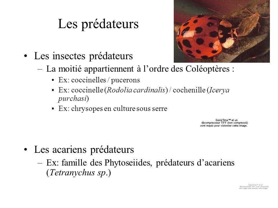 Les prédateurs Les insectes prédateurs Les acariens prédateurs