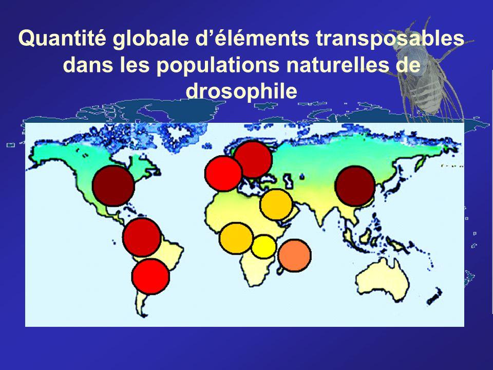 Quantité globale d'éléments transposables dans les populations naturelles de drosophile