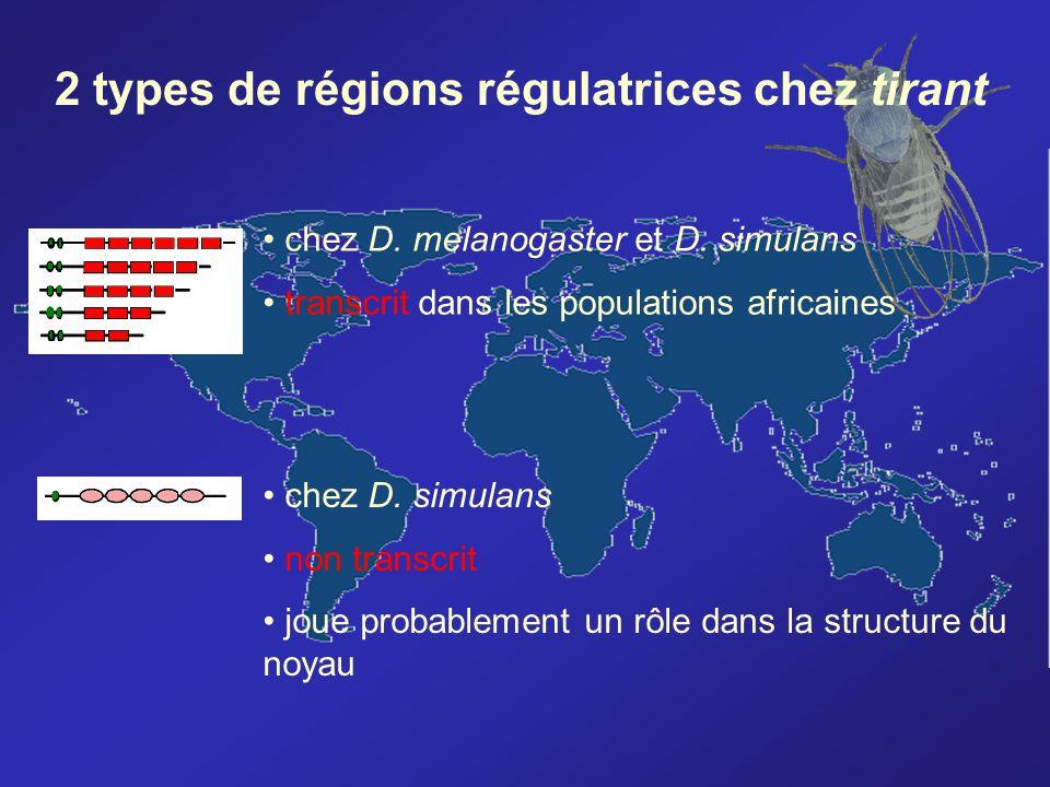 2 types de régions régulatrices chez tirant
