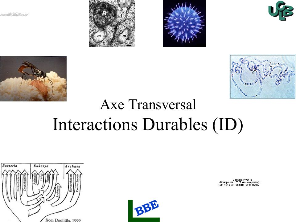 Axe Transversal Interactions Durables (ID)
