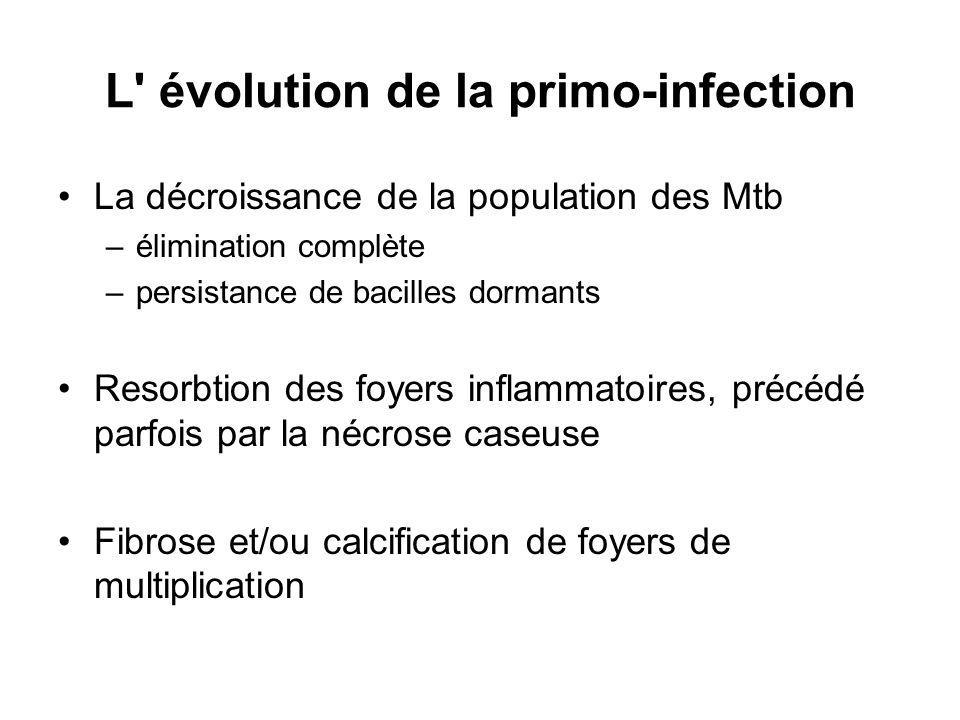 L évolution de la primo-infection