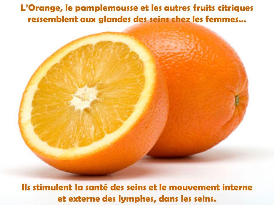 L'Orange, le pamplemousse et les autres fruits citriques ressemblent aux glandes des seins chez les femmes…