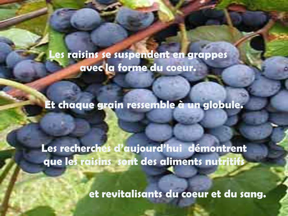 Les raisins se suspendent en grappes avec la forme du coeur.