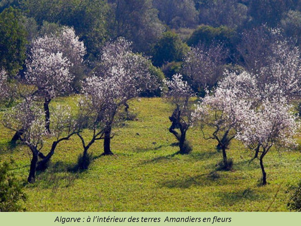 Algarve : à l'intérieur des terres Amandiers en fleurs