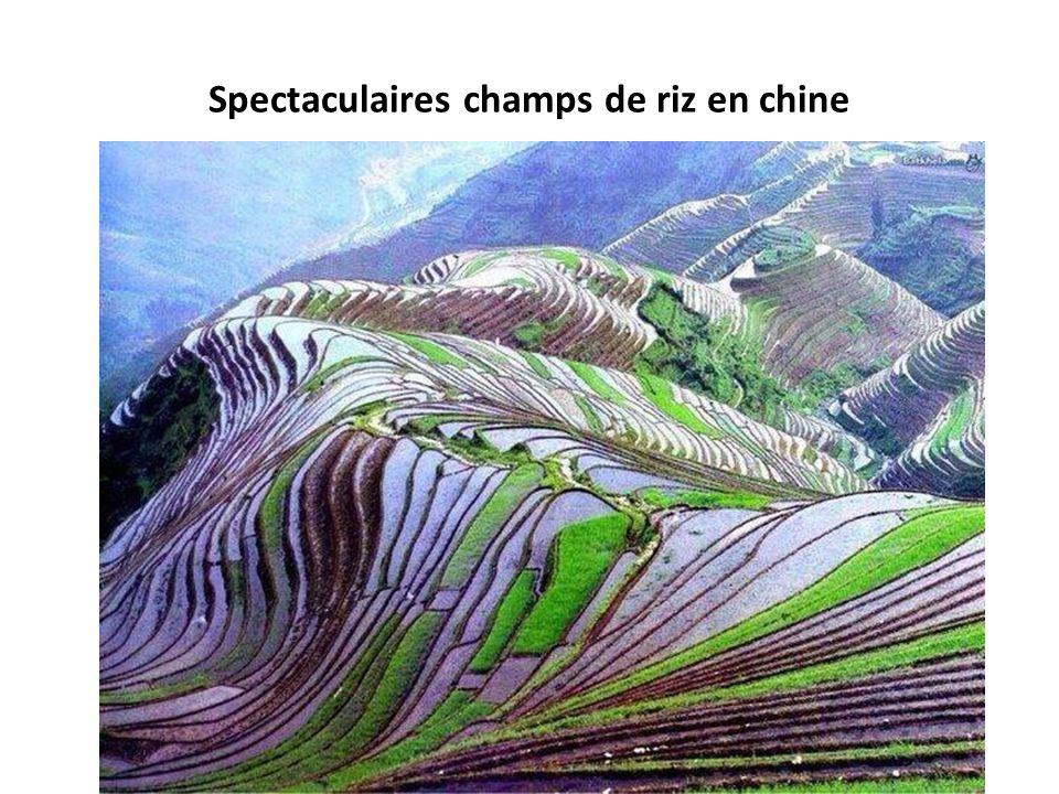 Spectaculaires champs de riz en chine